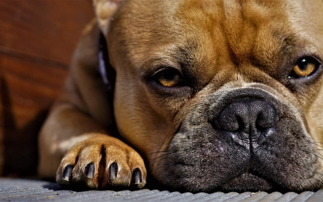 Could Your Pet Have Allergies?