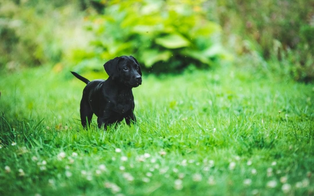 Protect Your Pet From These Garden Toxins